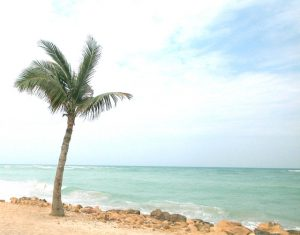 beach with palm tree